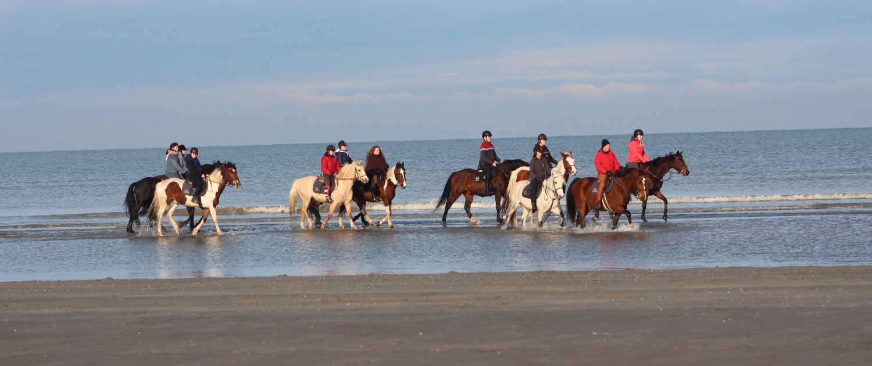 De Drie Vijvers - Adinkerke - met de paarden wandelen aan zee